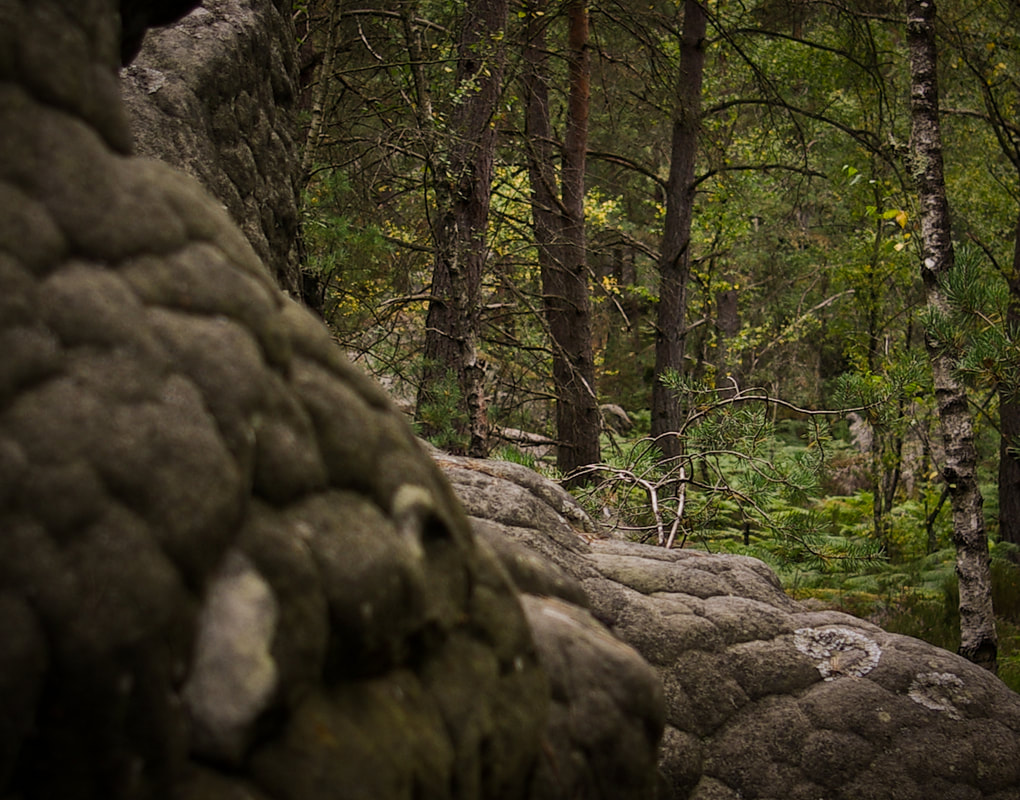 Reptilian textures on the sandstone boulders of Fontainebleau forest