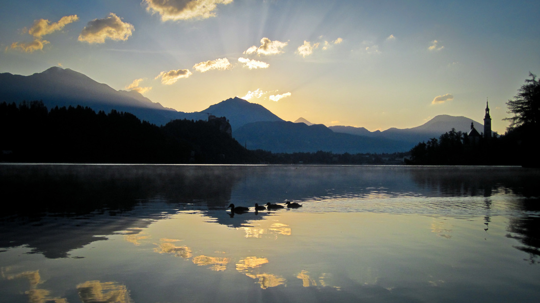 Sunrise ducks at lake Bled, slovenia