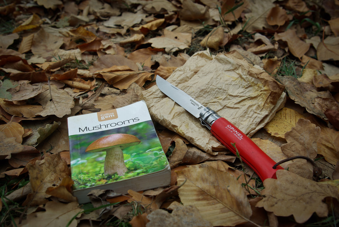 An opined knife and a book on mushrooms.
