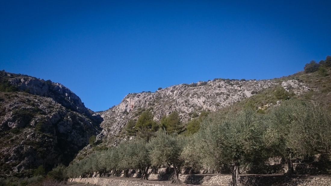 Olive trees and stunning rock faces in the hills above Parcent