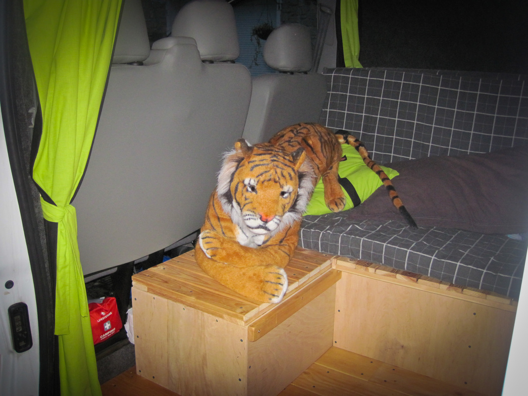 tiger in the converted van
