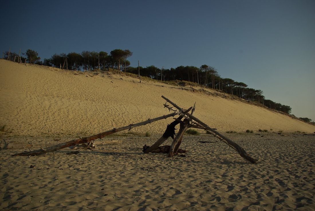 Artistically arranged wood at the Dune du Pilat