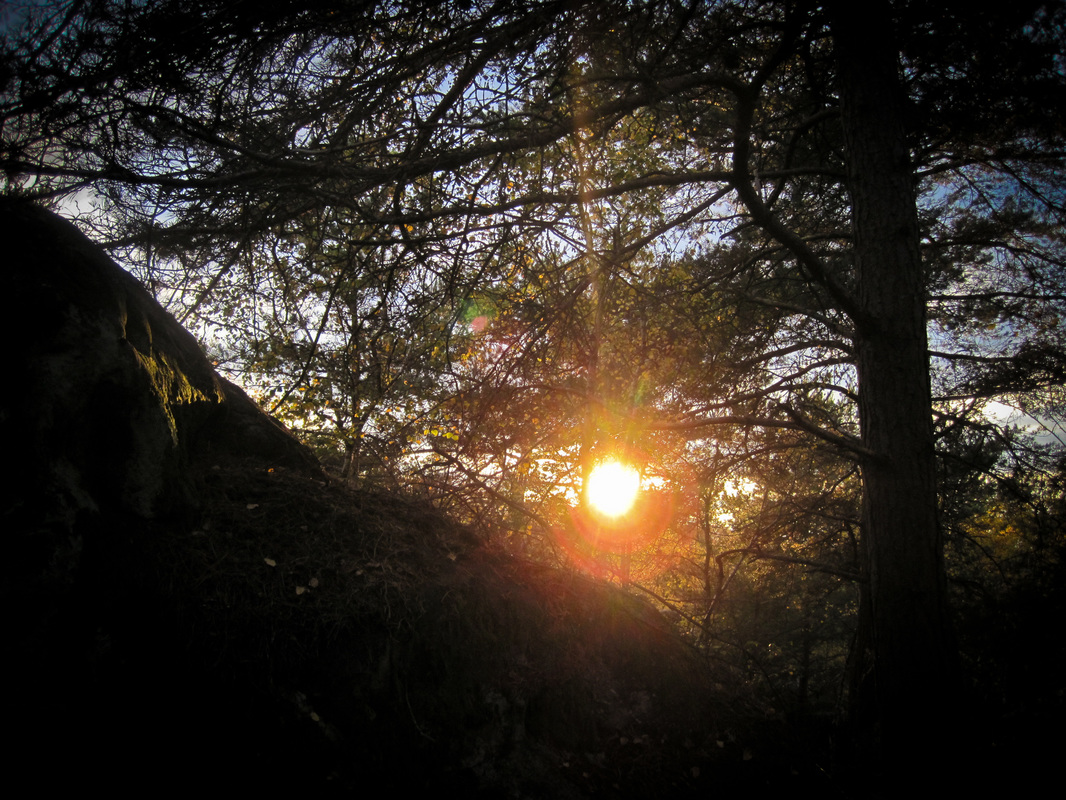 Sunset over the Fontainebleau forest.